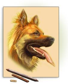 kohle für hunde