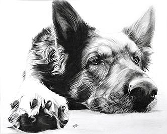 Hundeportraits nach Foto gemalt